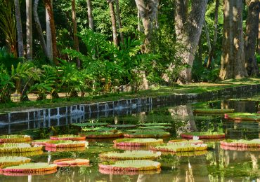 Pamplemousse - Mauritius